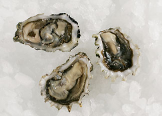 Live Evening Cove Oysters